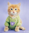 Ginger kitten fridge magnet
