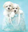 Puppies greetings card
