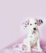 Dalmation puppy sticky notes