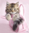 Tabby Kitten Greetings Card