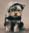 Yorkie Pup fridge magnet
